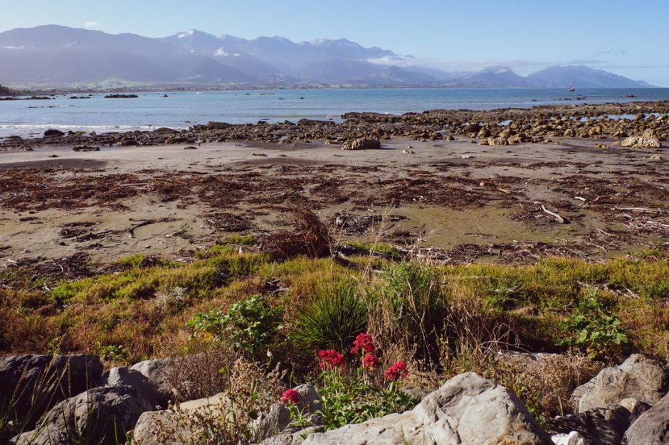 ocean views along the Kaikoura Peninsula walkway