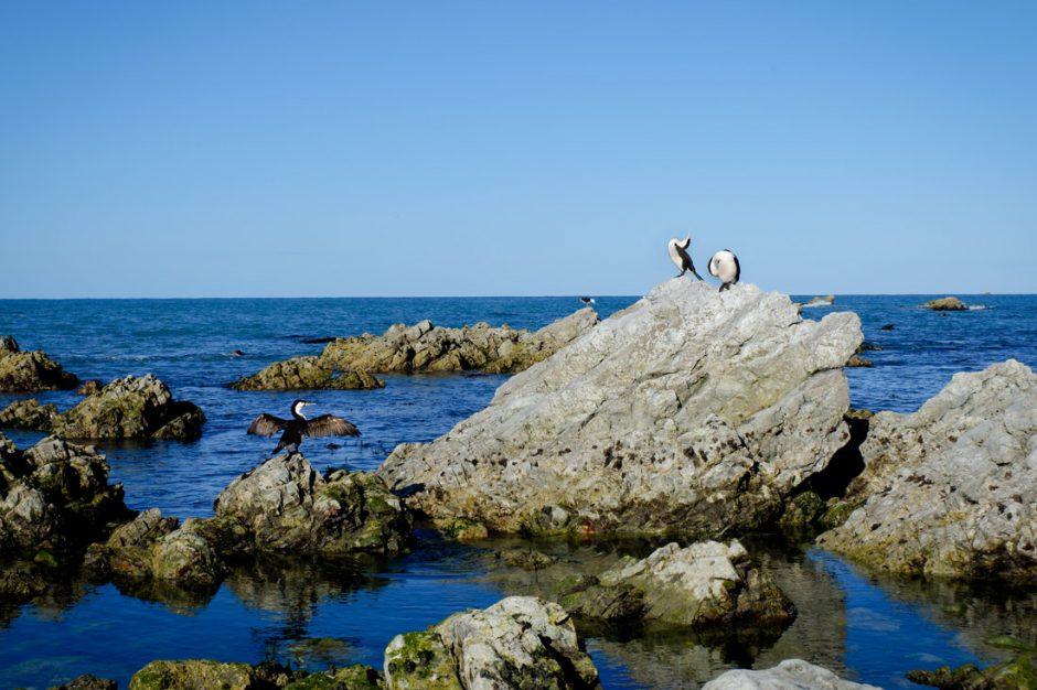 sunbathing cormorants
