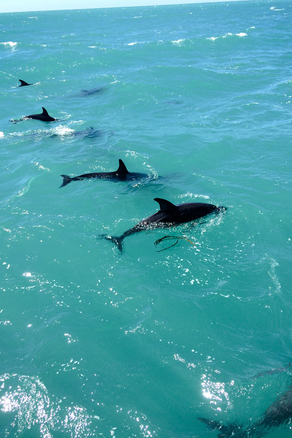 row of dolphins during the whale watching tour