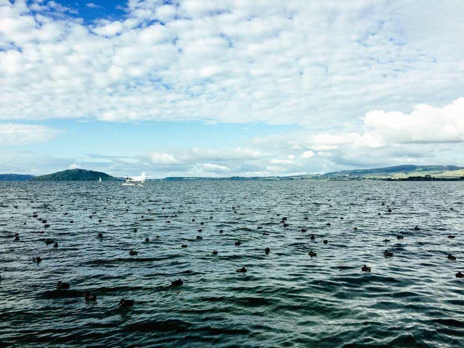 water plane flying over Lake Rotorua with Mokoia Island in the background