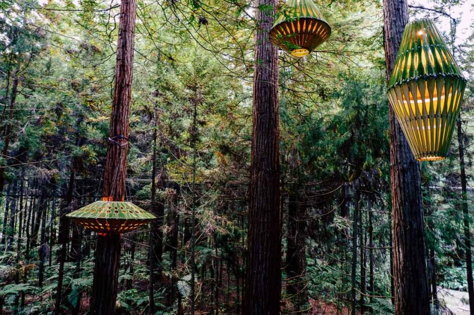 lanterns lit at dusk in the Redwood Forest