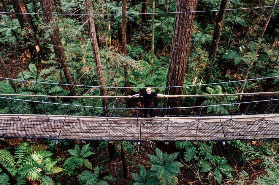looking down on the Redwood Forest Rotorua Treewalk Trail