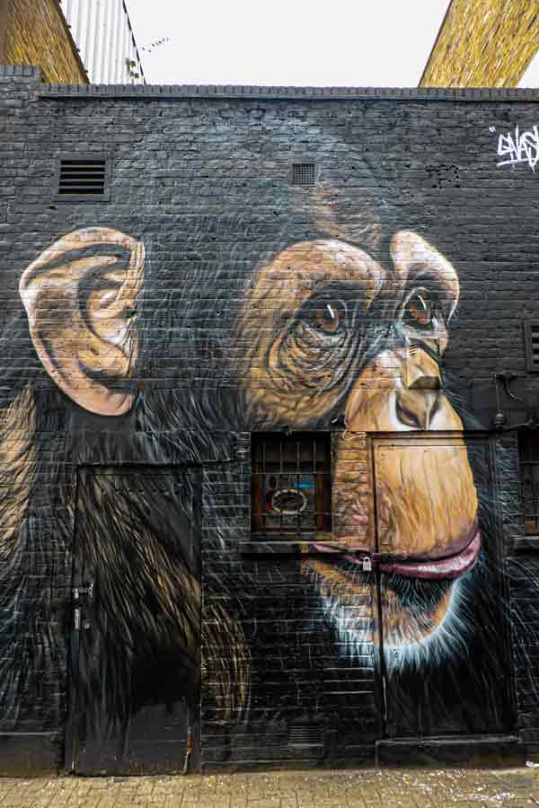 street art in Camden, London, a realistic painting of a chimpanzee by Gnasher