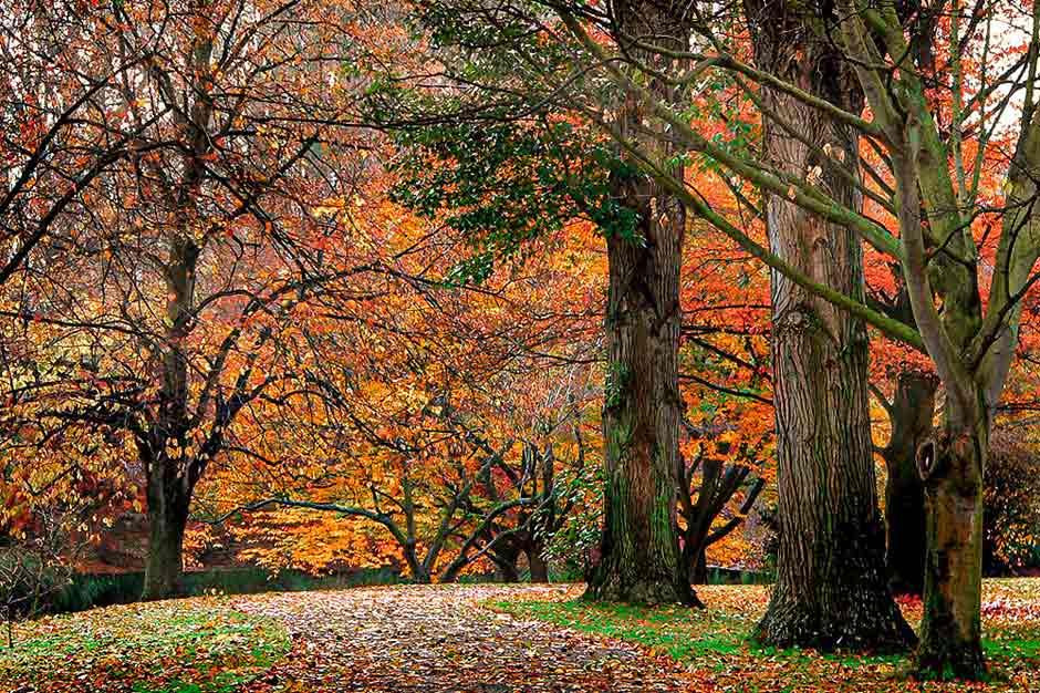 Autumn foliage in Hagley Park, New Zealand