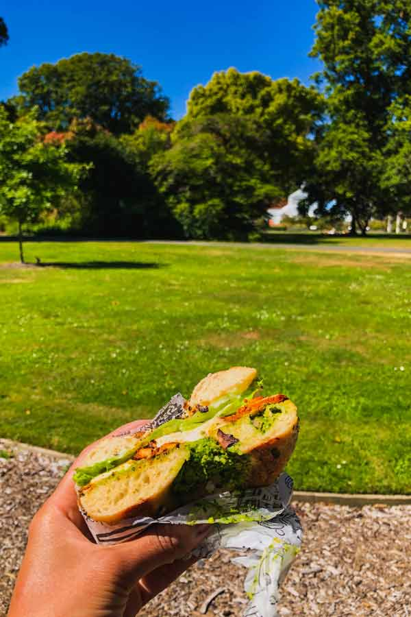 Close-up of my bagels sitting in the Dunedin Botanic Garden, New Zealand