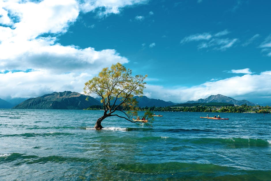 Desolate tree growing in the midst of the vast Wanaka Lake in New Zealand with kayakers in the backgroun