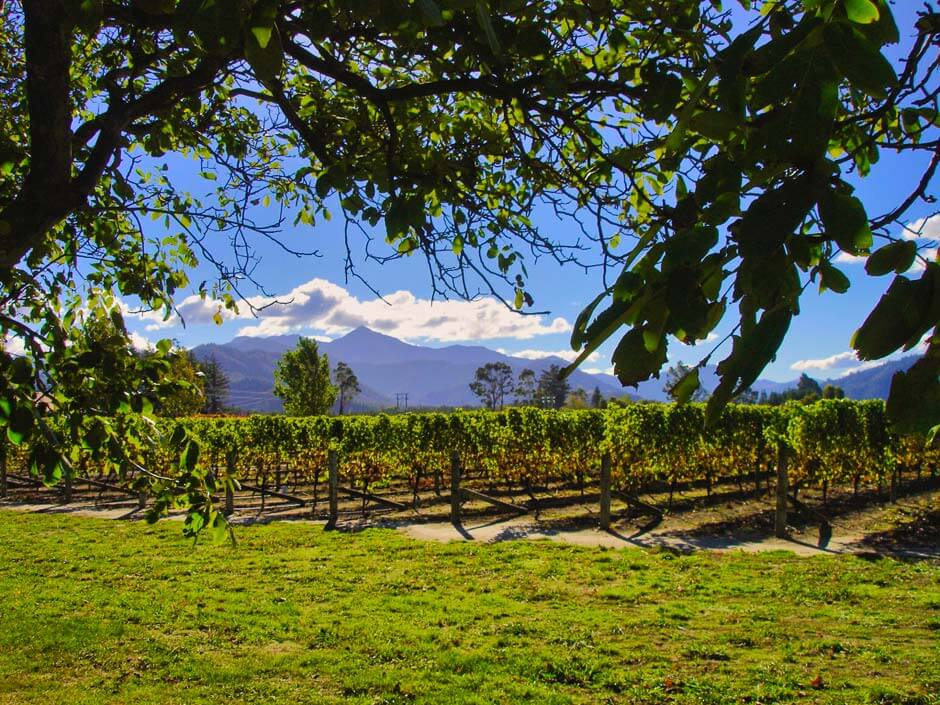 view over a vineyard in Blenheim, in the Marlborough region of New Zealand's South Island
